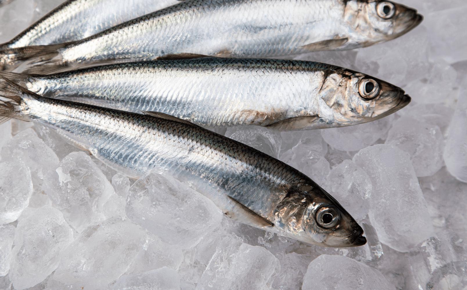 Metody przetwarzania i przechowywania ryb
